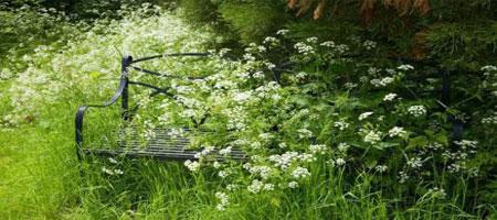how to tame an overgrown garden