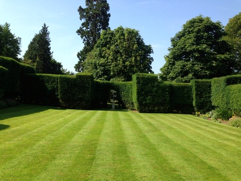 Landscape Services - Lawns & Turf